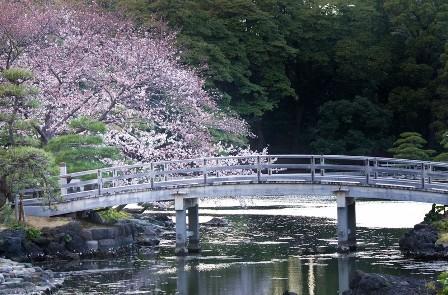 桜の開花情報がチラホラと!